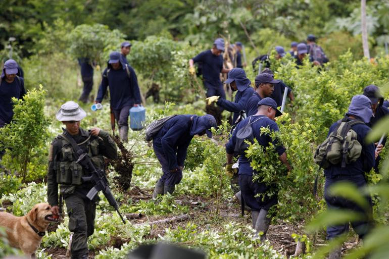 Source: Reuters / Fredy Builes, http://www.ibtimes.com/cocaine-blues-colombias-farc-rebels-want-some-drug-crops-legalized-1072434