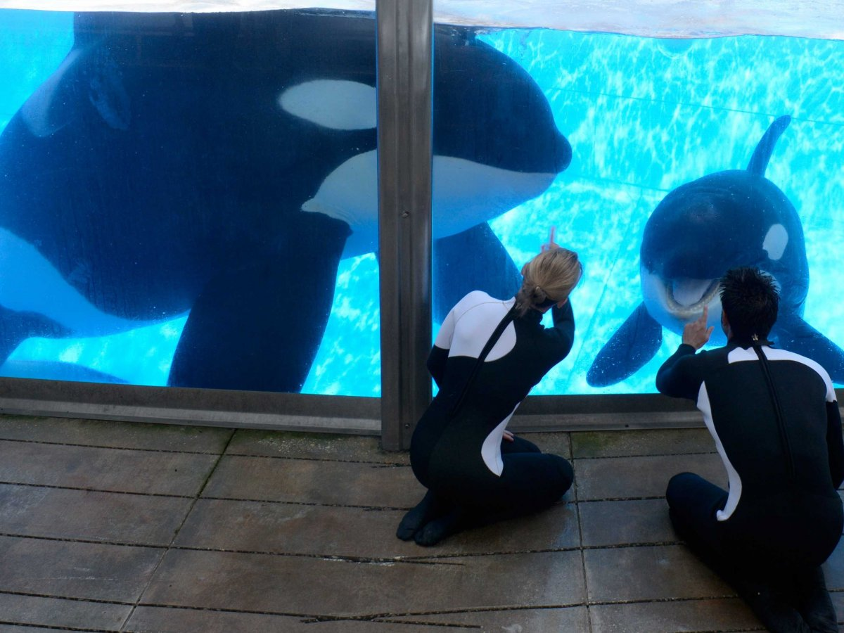 seaworld-killer-whale-3
